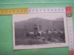 129)  Hautes Alpes : Troupeau De Chevres :   Vallee Et Gorges Du Queyras :haute Montagne : - Sonstige Gemeinden