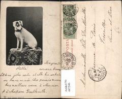 447546,Tier Hund Terrier - Chiens
