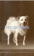 53474 REAL PHOTO THE DOG BEAUTY YEAR 1938 POSTAL POSTCARD - Postcards