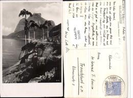 511293,Brazil Rio De Janeiro Avenida Niemeyer Küste Palmen - Ohne Zuordnung