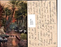 511277,Africa Riviere Dans L'oasis Oase Palmen Fluss Wehr Eseln - Ansichtskarten