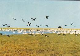 NORD CAMEROUN--WAZA---oiseaux Dans Une Mare Du Parc National De Waza---voir 2 Sans - Cameroun