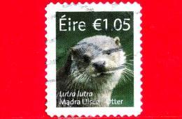 IRLANDA - EIRE - Usato - 2015 - Fauna - Lutra Lutra - Madra Uisce - European Otter - 10.5 - Usati