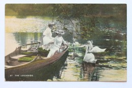 AT THE LOCHSIDE, Water Lily Swan Lake - Postcards