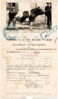 Photo D'un Reproducteur De La Race Pie Noire Bretonne Collée Sur Document-1928 - Frankreich