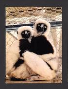 ANIMAUX - ANIMALS - RAJAKO - FAUNE LÉMURIEN - FAUNA LEMURS - MADAGASCAR - BY HACHETTE - Animaux & Faune