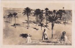 AFRIQUE,AFRICA,AFRIKA,ALGERIE  Française,ALGERIA,COLOMB BECHAR,sahara,frontière Marocaine,maroc,1952,dune S,plantation
