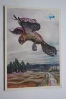 HOW BIRDS FLY   - OLD USSR PC 1977 - FAUCON / FALCO Common Kestrel - Oiseaux