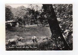 Juil16  75696   Postua Pascolo All' Alpe Fin Pian - Unclassified