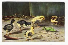POUSSINS  +  INSECTE  ( Sauterelle , Criquet ) ( Illustrateur : M. SCHÖNIAN , Munchen ) /  Edit.  T.S.N. , Série  N° 651 - Insectos