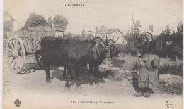 ATTELAGE DE CHAR AUVERGNAT SUPERBE BEAU PLAN - Auvergne