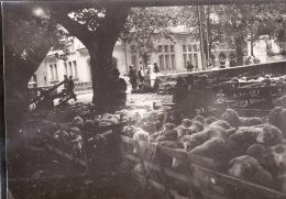 Photo Octobre 1931 DIGNE-LES-BAINS - Le Marché Aux Moutons (A152) - Digne