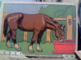 CAVALLO HORSE  ILLUSTRATO   N1950   FN3734 - Cavalli