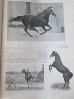 1905  FLYING FOX  L étalon D Un :million équitation Race Pure Sang  Cheval  Haras De JARDY - Equitation