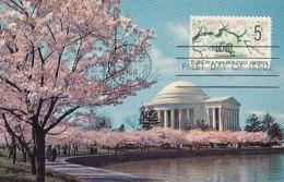 D24519 CARTE MAXIMUM CARD 1966 USA - JEFFERSON MEMORIAL WASHINGTON BLOSSOM TREES CP ORIGINAL - Architecture