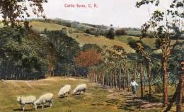 67Gc    Costa Rica Cattle Farm - Costa Rica