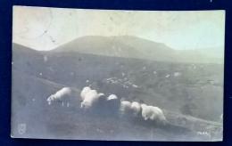 Cartolina Postale - Gregge Di Pecore - Allevamenti