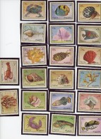Coquillages,crustacés,poissons-Fujeira-MI 1019/38***MNH***MNH - Conchiglie