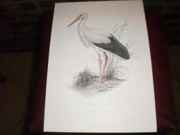 Lithographie Cigogne Blanche - Litografia