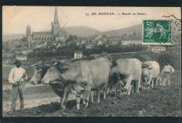 EN MORVAN - Boeufs Au Labour - Edit. E. Caïus à AUTUN - Autun