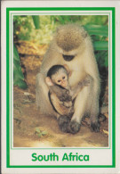 South Africa - Monkey And Baby - 2x Nice Stamps - Südafrika