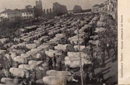 CARTOLINA DI  CASTELFRANCO -TREVISO- MERCATO SETTIMANALE DEL VENERDI' VIAGGIATA 1914 SUPER!! - Treviso