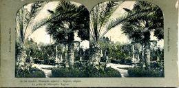 N°50341 -carte Stéréoscopique -le Jardin De Mustapha -algérie- - Estereoscópicas