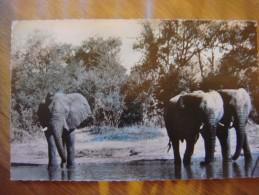 Faune Africaine : Eléphants à La Rivière - Éléphants