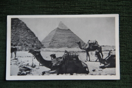 LE CAIRE - Les Pyramides - El Cairo