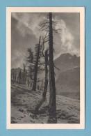 Kt Graubünden, NATIONALPARK, LANDSCHAFT, BÄUME Und BERGE // Bund Für Naturschutz - GR Grisons
