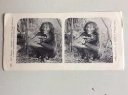 SÜDAMERIKA DER STÄMME PILAGO,SOUTH AMERICA OF THE TRIBES PILAGO STEREOCARD - Postcards