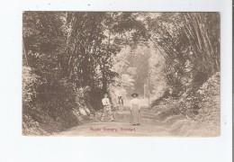 TRINIDAD RUSTIC SCENERY 1917 (TRINITE ET TOBAGO) - Trinidad