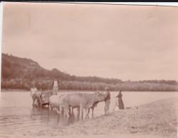 MINI PHOTO---47---MONTESQUIEU  ?--Scène Champêtre---au Bord De La Garonne---voir 2 Sans - Photographie
