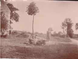 MINI PHOTO---47---MONTESQUIEU  ?--Scène Champêtre---les Oies De La Ferme---voir 2 Sans - Photographie