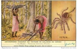 Série Liebig Belge Complète N°1637 - Arthropodes Venimeux Où Vecteurs De Maladies Du Congo - Année 1956 - Liebig