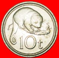 § POSSUM: PAPUA NEW GUINEA ★ 10 TOEA 1976 GREAT BRITAIN MINT LUSTER! LOW START★ NO RESERVE! - Papuasia Nuova Guinea