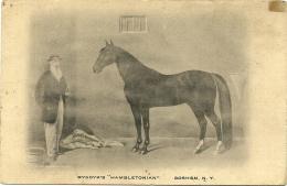 HAMBLETONIAN 10  Stallion Stallone  William Rysdyk  Goshen New York - Cavalli