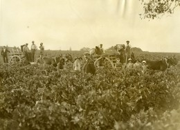 France Moulis Grand Poujeaux Vendanges Vin Chasse Spleen Ancienne Photo 1930
