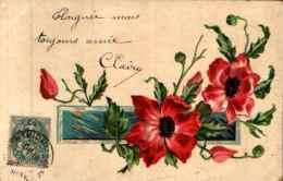 Fleurs Pavot Coquelicot - (chateau-thierry, 1904) - Blumen