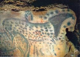 46 - CABRERETS - Grotte Temple Du Pech-Merle - Galerie Des Peintures - Fragments De La Fresque Des Chevaux - Autres Communes
