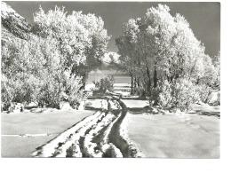Albert Steiner Paysage D'hiver - Photographie