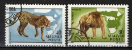 UNGHERIA - 1981 - ANIMALI SELVATICI - USATI - Posta Aerea