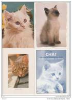 12 CP - Chats - Neuves - (ref 303) - Chats