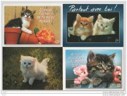 12 CP - Chats - (ref 1189) - Chats