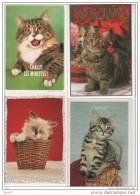 12 CP - Chats - Neuves - (ref 454) - Chats