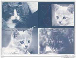 12 CP - Chats - Neuves - (ref 476) - Chats