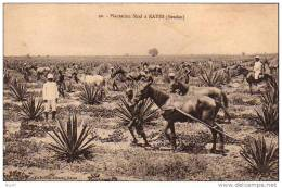 "(  Soudan  )       à  KAYES     ""   Plantation  Sizal - Sudan"
