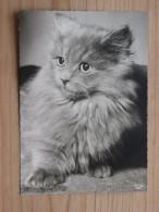 AK1017 - Katze - Popp 1337 - Ungelaufen - Topp Erhalten - Katzen