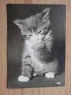 AK1018 - Kleine Katze - Popp 2804 - Ungelaufen - Topp Erhalten - Katzen