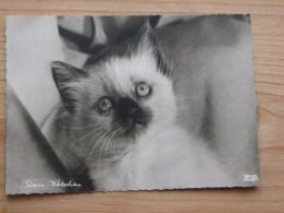 AK1019 - Kleines Siam-Kätzchen - Popp 2828-1 - Ungelaufen - Topp Erhalten - Katzen